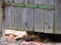 Sad dog. Dog protecting a gate Royalty Free Stock Photos