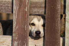 Sad dog. A lonely sad dog behind a fence Stock Photos