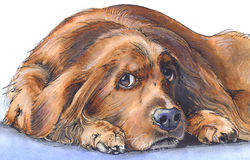 Sad dog. Watercolor and pencils illustrations of a sad-looking dog Stock Photos