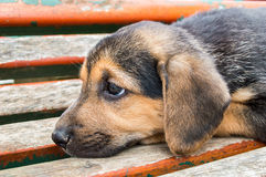 Sad dog Stock Image