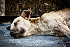 Sad dog abandoned on the street Royalty Free Stock Photography