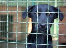 Sad dog Stock Image
