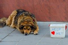 Sad Dog. Begging on Street Stock Photos