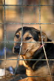 Sad dog behind bars Stock Photos