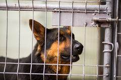 Sad dog. Behind bars wanting to get out stock images