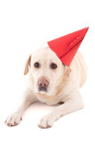 Sad dog in birthday hat isolated on white Royalty Free Stock Photos