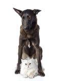 Sad dog with cat. isolated on white background Stock Photos