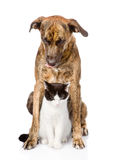 Sad dog and cat sitting in front. isolated on white background Stock Images