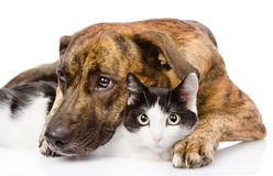 Sad dog and cat together. isolated on white background Royalty Free Stock Photos