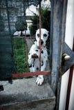 Sad Dog Royalty Free Stock Image