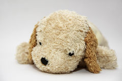 Sad Dog Doll Royalty Free Stock Photography