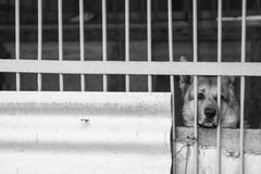 A sad dog in an enclosure Stock Photography