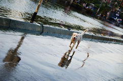 Sad dog escape from the flood Stock Image