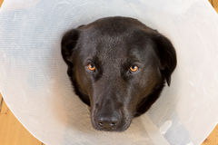 Sad dog with funnel Royalty Free Stock Image