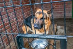 Sad dog german shepherd in a cage Royalty Free Stock Photo