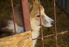 Sad dog in the house with bars. The shelter for homeless animals Royalty Free Stock Photos