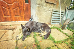 Sad dog by a house Royalty Free Stock Photos