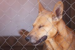 Sad dog in iron cage in shelter. Portrait of a sad dog in cage closeup Royalty Free Stock Photos