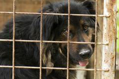 Sad dog in kennel Stock Photography