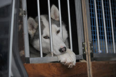 Sad dog in kennel Royalty Free Stock Image
