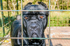 Sad dog left behind Royalty Free Stock Photography