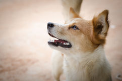 Sad dog looking helpless. With vignet Royalty Free Stock Photo
