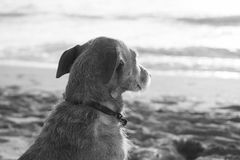 Sad dog looking at the sea Royalty Free Stock Photo
