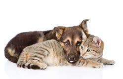 Sad dog lying with cat. isolated on white background.  royalty free stock photos