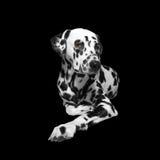 Sad dog lying on the floor. On black background stock images
