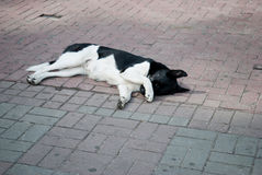 Sad dog lying on the ground / Shocking face of homeless  when big cat walk pass  stone pavement  Dogs Are Waiting For Their  Walke Royalty Free Stock Photography