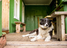 Sad dog is missing alone, sitting on the porch. Of a country house royalty free stock photography