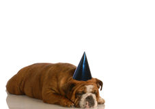 Sad dog at party Royalty Free Stock Images