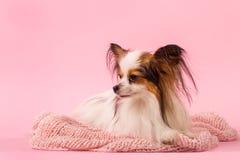 Sad dog on a pink background