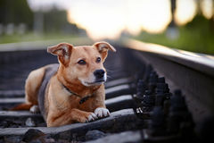 Sad dog on rails. Stock Photos