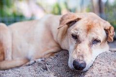 Sad dog resting on sand Stock Image