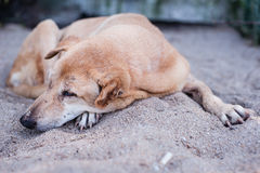 Sad dog resting on sand Royalty Free Stock Images