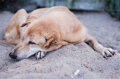 Sad dog resting on sand Royalty Free Stock Images