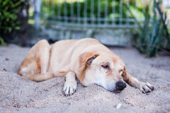 Sad dog resting on sand Stock Images