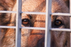 Sad dog's eyes. Close up of this sad dog's eyes behind her enclosure Stock Photo