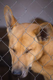 Sad dog with sad look in a cage closeup. Portrait of a sad dog with sad look in a cage closeup Royalty Free Stock Photography