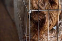 Sad dog separated inside pet pen for naughty behavior Royalty Free Stock Photos