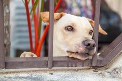 Sad dog is sitting behind iron gate. royalty free stock image