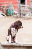 Sad dog sitting Stock Images