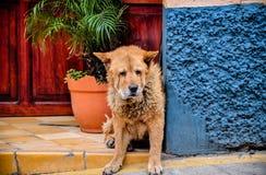 Sad dog. Sitting outside against wall Stock Photos
