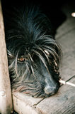 Sad dog. A dog staring at you with a very strong look giving you a feeling he is so sad Royalty Free Stock Photos