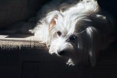Sad dog waiting for adoption in shelter. Sad beatiful dog waiting for adoption in shelter Royalty Free Stock Photos