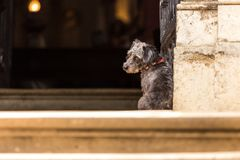 A sad dog is waiting for the owner. Royalty Free Stock Photo