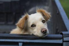 Sad dog royalty free stock images