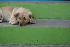 Sad dog on the walking way. Dog look sad on the walking way Royalty Free Stock Photography