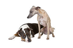 Sad dogs Royalty Free Stock Images